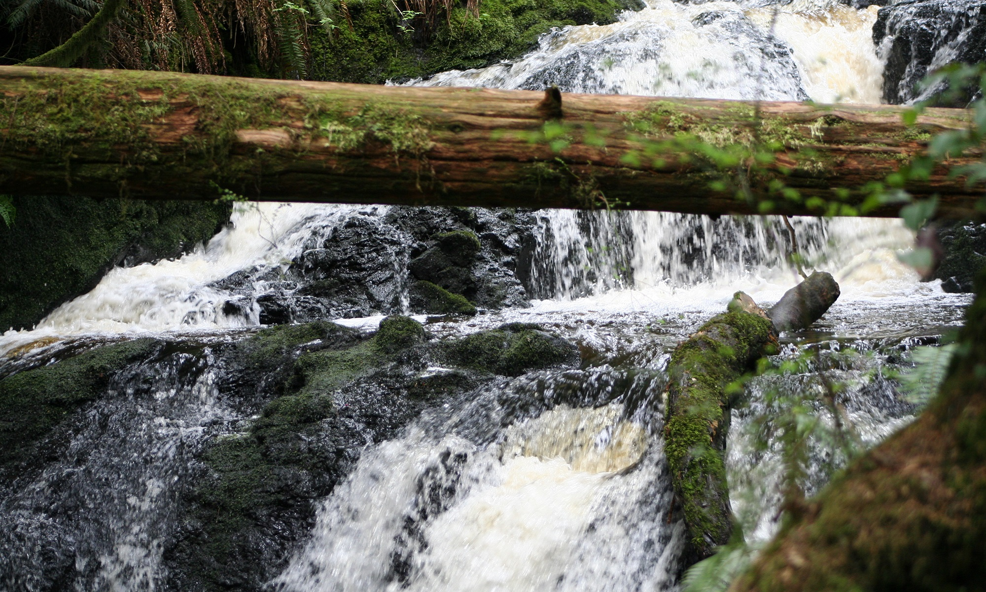 Mountain Stream with Log Across 2015